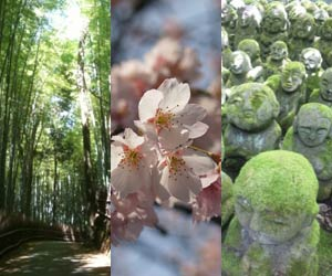 image - Kyoto Sagano Tour -
