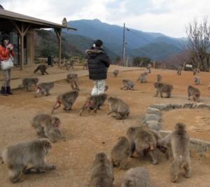 Monkey park - Kyoto Sagano Walk -